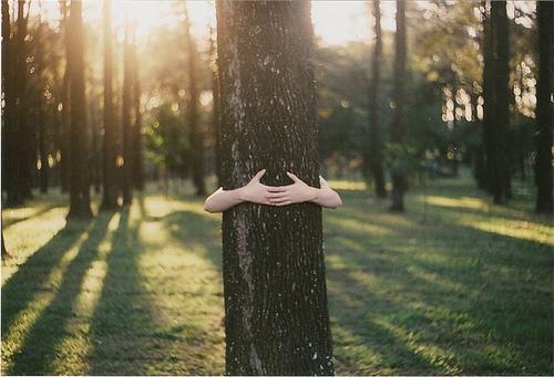 treehug-MYSTICMAMMA