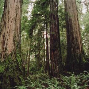 Trees are sanctuaries...