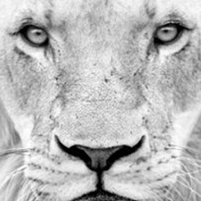 Potent *New MOOn* in Leo July 30th, 2011