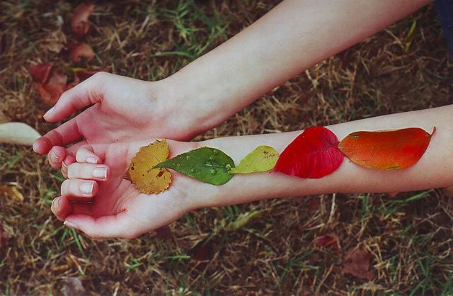 Foglie Autumn