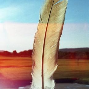 Sing, speak for the land; speak for the wild~