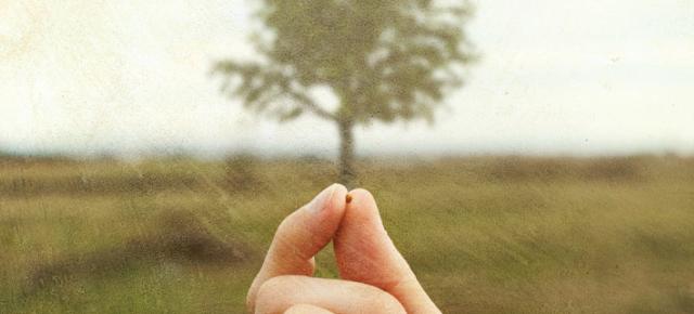 plantingseeds-mysticmamma