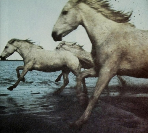 yearofhorse-mysticmamma