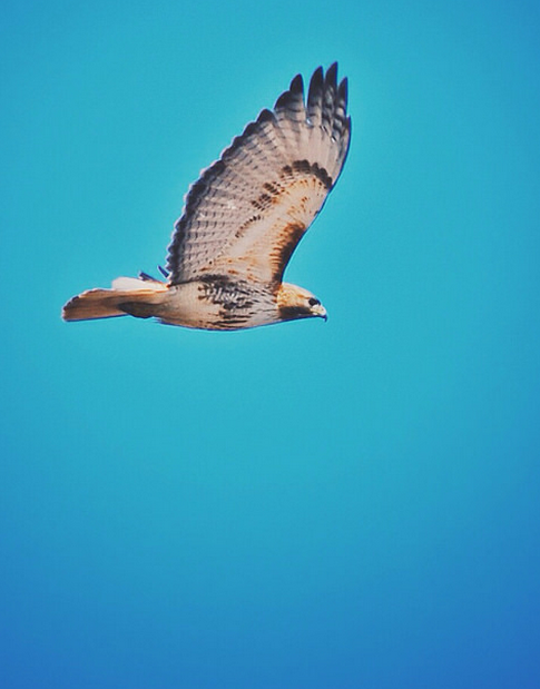 hawk-messenger-mysticmamma