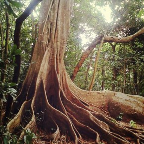 Kaypacha Report: The roots of the family tree go deep~