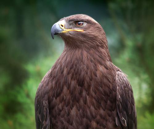 hawk-mysticmamma