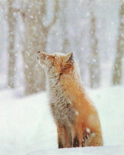fox-mysticmamma