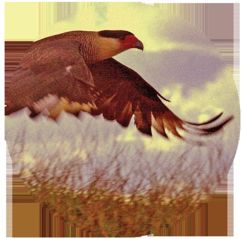 birdtribe-mysticmamma