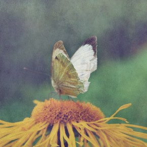 Astrology for August 2015 by Sarah Varcas: Small Acts of Great Power~