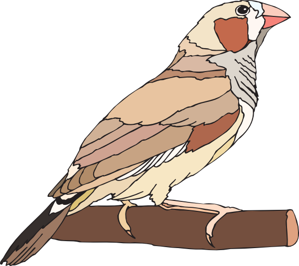 bird-MM