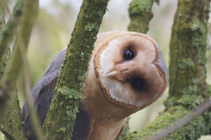 owl-mysticmamma