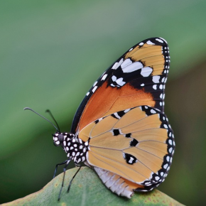 Weekly guidance from Kaypacha: Like a butterfly emerging from it's cocoon~