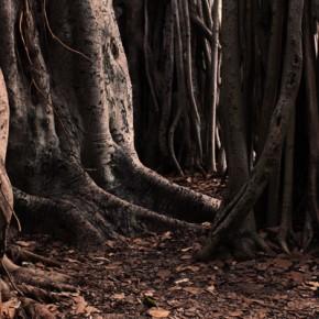 Weekly Guidance from Kaypacha: Feeling my strength as my roots run deep~